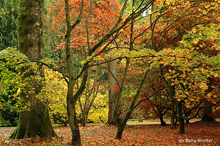 Chipping Campden woods in Autumn
