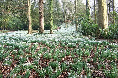 Snowdrop Wood at Rococo Gardens